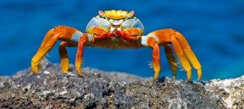 Galapagos Explorer