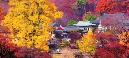 Pre- & Post Tours: Korea Full-Day or Two-Day Tours