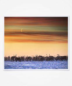 Reindeer and Crescent Moon